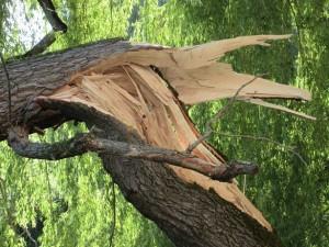 Baum_fällt_2