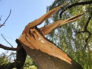 Baum_fällt_3