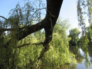 Baum_fällt_4