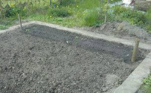 moehrenpflanzung